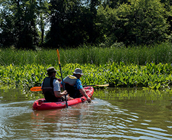 Water Chestnut Removal, photo by Stephen Badger